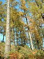 Trees and sky - geograph.org.uk - 178607.jpg