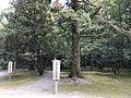 Trees in Miyazaki Shrine.jpg