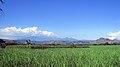 Trenggalek paddy field.jpg