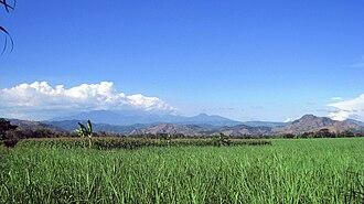 Trenggalek Regency - A typical paddy field in Trenggalek, Indonesia