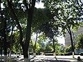 TurnuMagurele-Romania Street.jpg