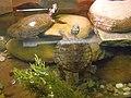 Turtle - Painted PA160293.jpg