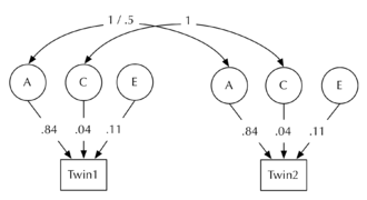 Twin study - B: ACE model showing standardised variance coefficients