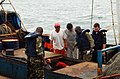 US Navy 090429-N-1655H-181 Portuguese Navy Lt. Cmdr. Antonio Mourinha and Gabonese sailors inspect a holding bay for fish aboard an illegal fishing vessel during an Africa Partnership Station Nashville fisheries engagement.jpg