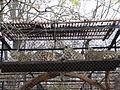 Uncia uncia in Warsaw Zoo - 01.jpg