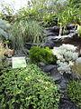 United States Botanic Garden plants, Washington, D.C. 2012.JPG