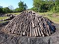 Vallée de Viñales-Fabrication du charbon de bois (3).jpg