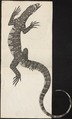 Varanus ocellatus - 1700-1880 - Print - Iconographia Zoologica - Special Collections University of Amsterdam - UBA01 IZ12400015.tif