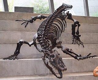 Megalania Species of reptile