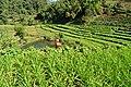 Vegetable field.jpg