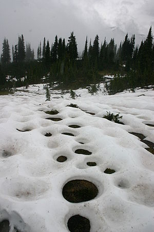 Snowmelt - Vegetation gives off heat, resulting in this circular snowmelt pattern.
