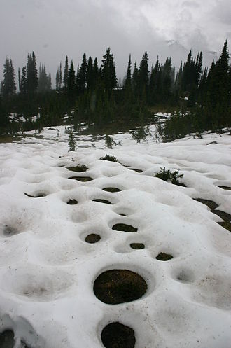 Snowmelt - Image: Vegetation Induced Circular Snowmelt