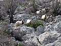 Velebit Ljubotic 3.jpg