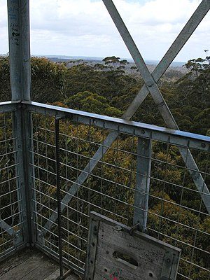 Gloucester Tree - The view over treetops from the metal cabin at the top of the Gloucester Tree