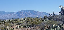 View of Mount Lemmon from West Saguaro National Park near Tuscon, AZ.jpg