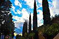 Vistas desde castillo de gibralfaro.JPG