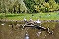 Vogelpark Teich.jpg