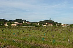 Vue d'ensemble de Saint-Gervais (Gard).JPG