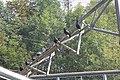 Waldrapp-Waidhofen 2258.JPG