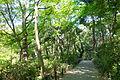 Walkway - Institute for Nature Study, Tokyo - DSC02088.JPG
