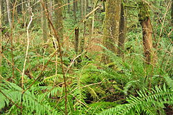 Wallace Falls State Park 10.jpg
