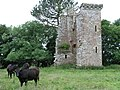 Wardhouse Tower - geograph.org.uk - 494908.jpg