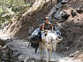 Waste removal near the top of Samaria Gorge, 051089.jpg