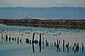 Water view at Don Edwards San Francisco Bay National Wildlife Refuge (5407589505).jpg