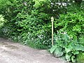 Waymarker at junction of footpath with bridleway east of Streat - geograph.org.uk - 1315471.jpg