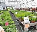 Wertmans Farm; Schaghticoke, NY (35507889776).jpg