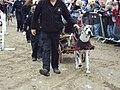 West Lancs dog display team, Southport 13.JPG