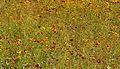 Wetland Flower Meadow (6086156265).jpg
