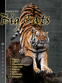 9716272a8839 Wikijunior Big Cats - Wikibooks