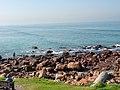 Wikimania 2018, Cape Town ( 1050506).jpg