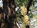 WildOrchidsThailand flip666.jpg