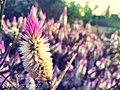 Wild flower pink.jpg