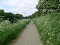 Wild flowers by canal path - geograph.org.uk - 1336565.jpg