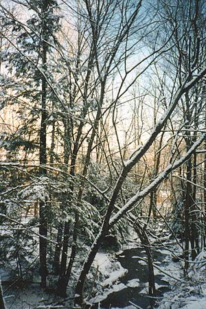East Otto, New York - Winter scene in East Otto, January 1998
