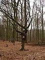 Wolbecker Tiergarten (18).JPG