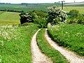 Wolds Way - geograph.org.uk - 184450.jpg