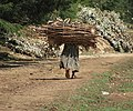 Woman Carrying Bundle of Wood, Ethiopia.jpg