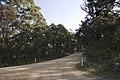 Wombeyan Caves Road - panoramio - Maksym Kozlenko (8).jpg