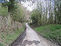 Wooded Lane by Minton - geograph.org.uk - 397824.jpg