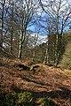 Woodland Path - geograph.org.uk - 763535.jpg