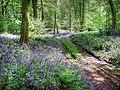 Woodland near Aqualate Mere - geograph.org.uk - 170373.jpg