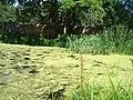 Zaļš ūdens - mikroskops - Panoramio.jpg