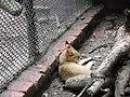 Zoo Kathmandu Nepal (5086479414).jpg