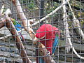 Zoo praha mg 008.jpg