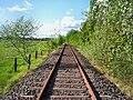 Zugstrecke Guntersblum-Eich-Osthofen (stillgelegt)- bei Eich- Richtung Gimbsheim 1.5.2008.jpg