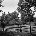 """""""Plac"""" pod lipo za ples, ograjen z lestvami, lojtrnicami in čeli od gaz. Plešejo ob opasilu ali drugih prilikah, Markovščina 1955.jpg"""